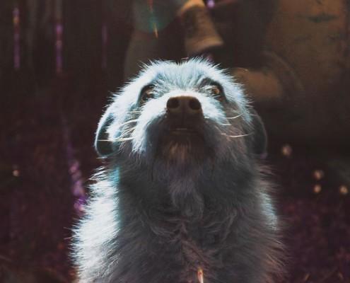 Joe - The ImOK hound
